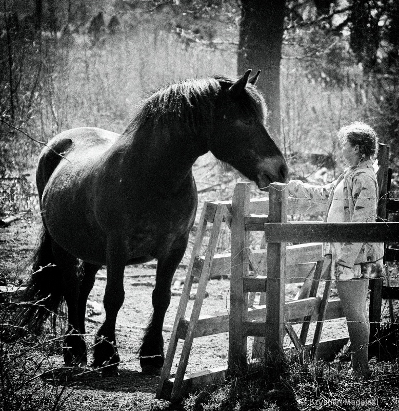 Horse and Ju