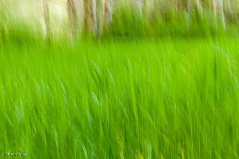 wind grass 7