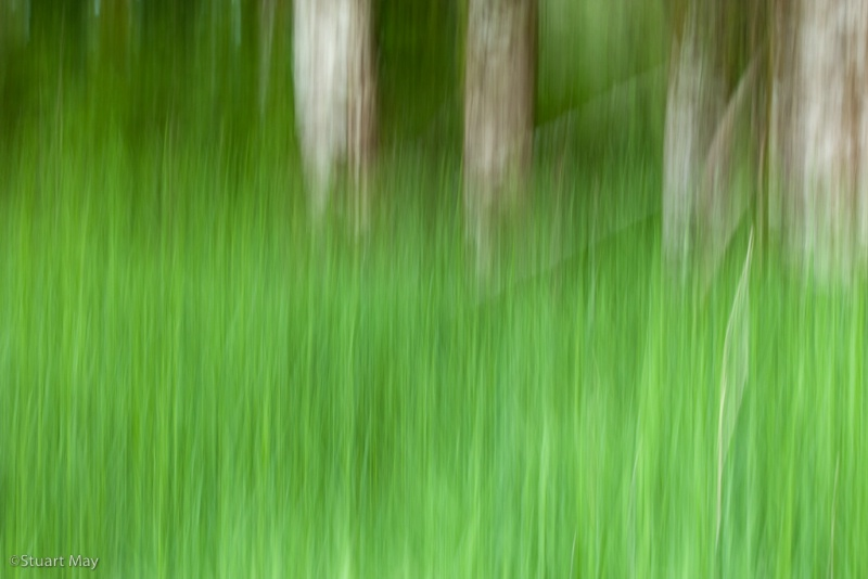 wind grass 6