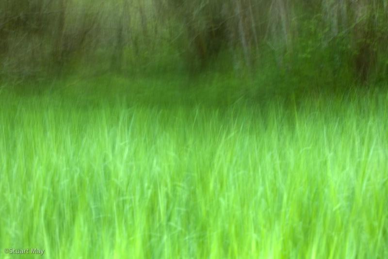 wind grass 5