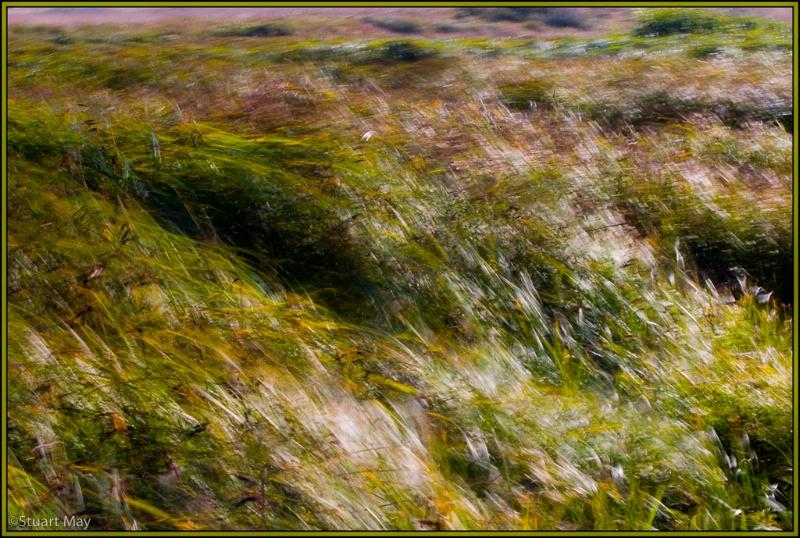 wind grass 4