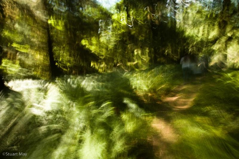 wandering trail 1