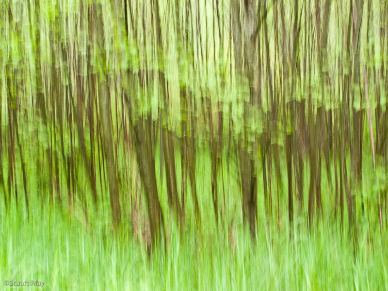 forest greens 2