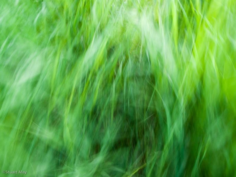wind grass 3