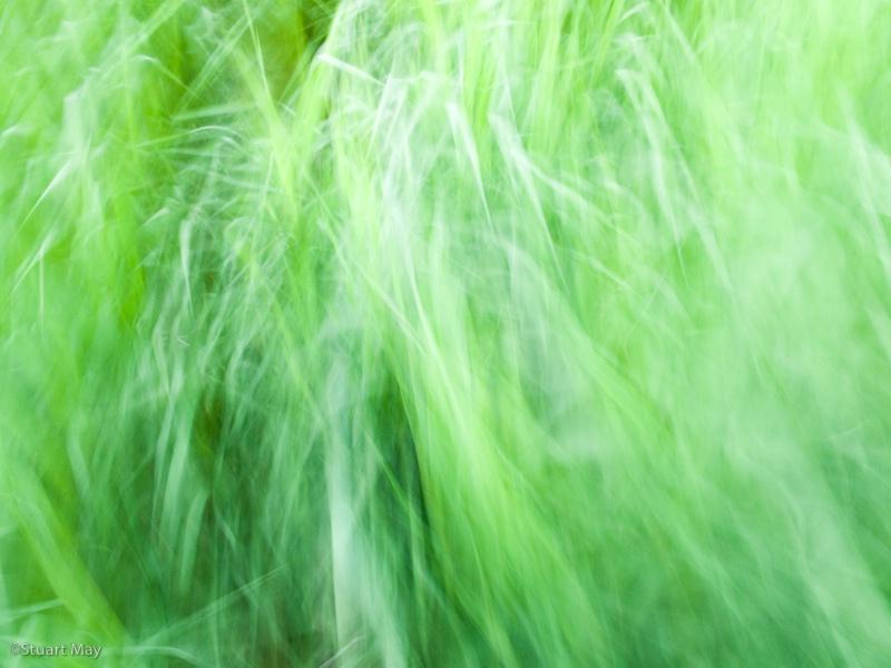 wind grass 2