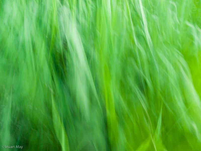 wind grass 1