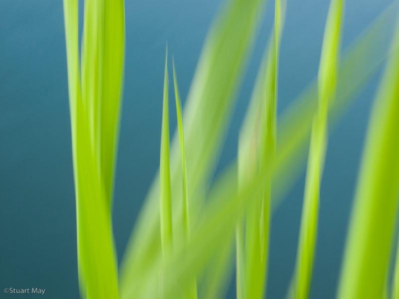 river grass 1