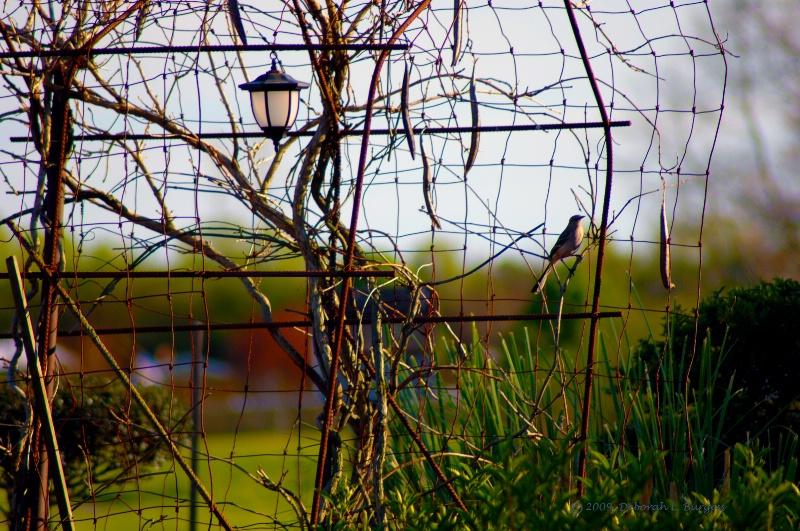 """""""Bird on a Wire"""""""