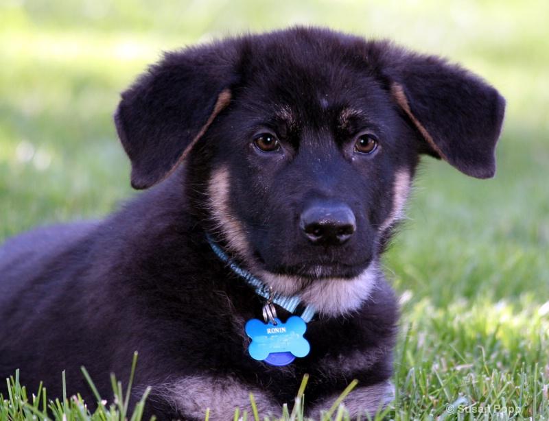 Brand new puppy