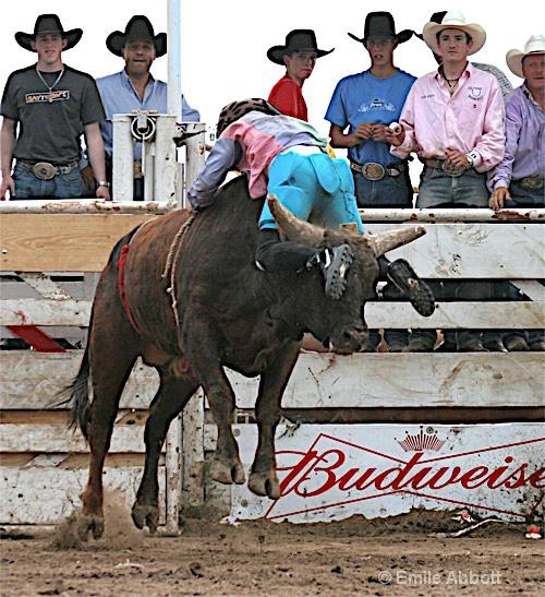 Smurf bull riding backwards