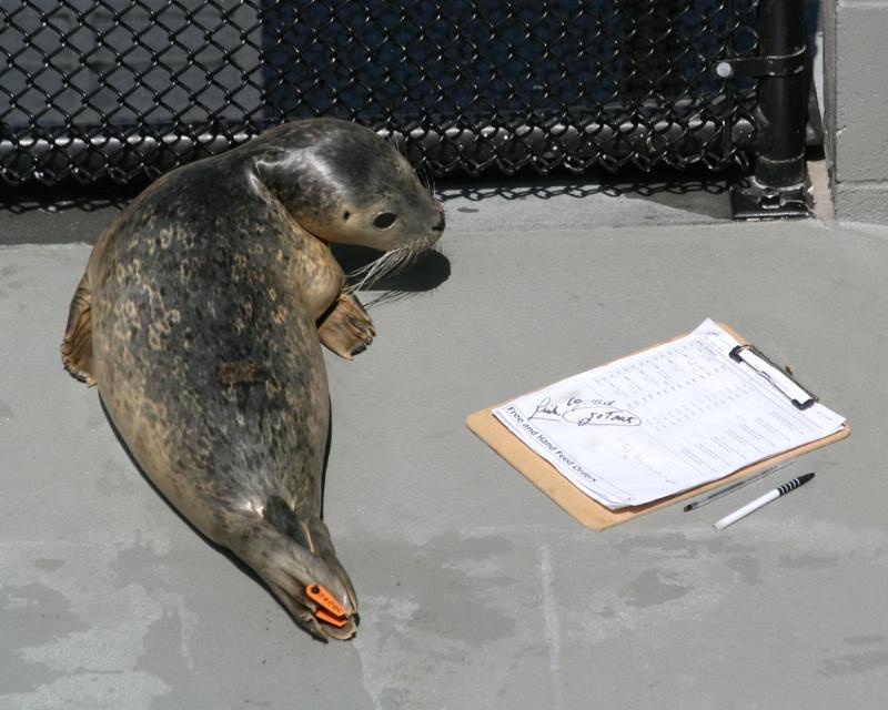 Checking His Chart