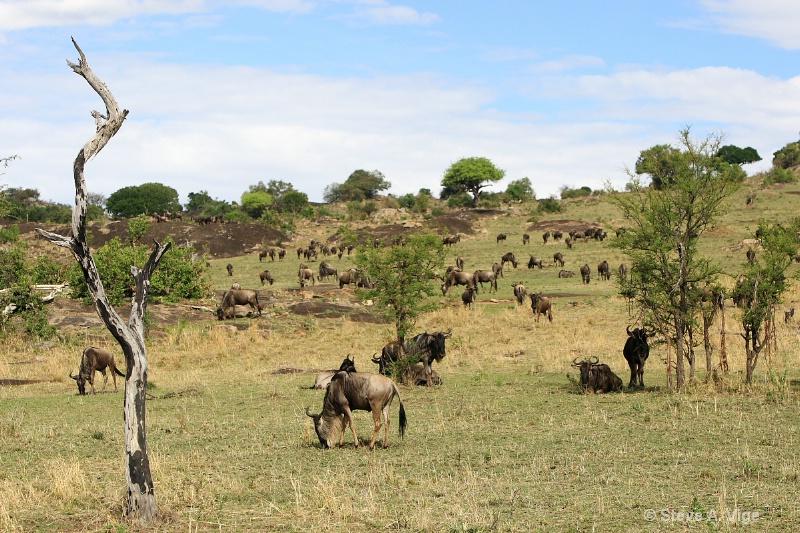 vige steve serengeti5 tan 012