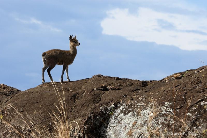 vige steve serengeti5 tan 019