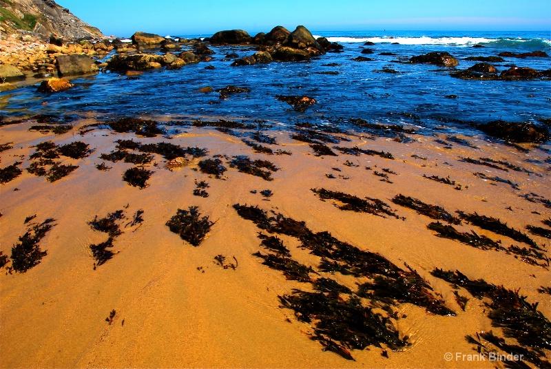 Seaweed on Block Island
