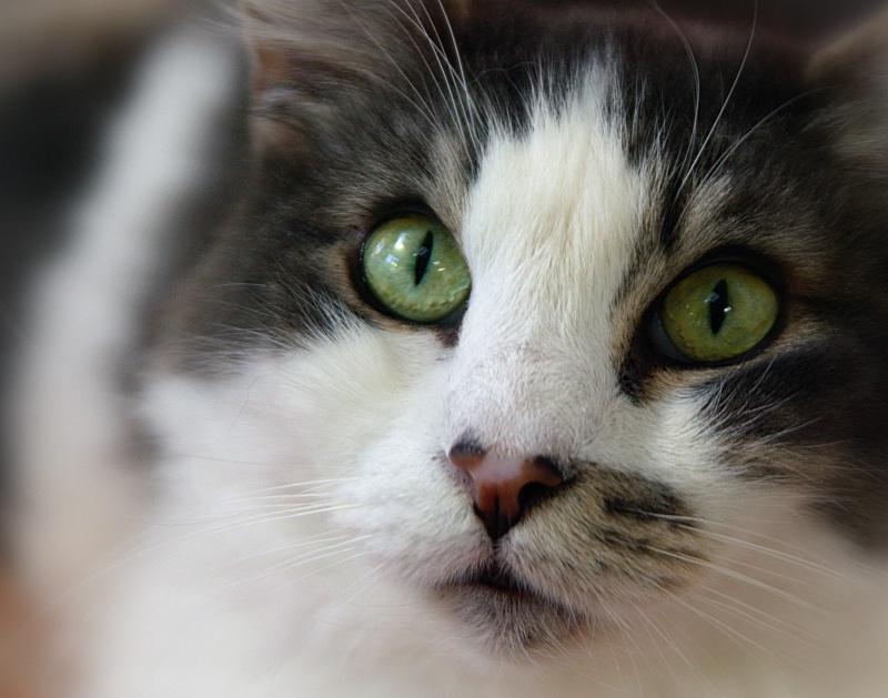 Cinder's Green Eyes