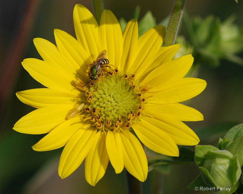 could this bee any more yellow