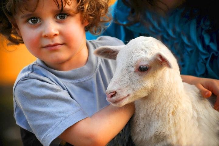 A Boy and his lamb.