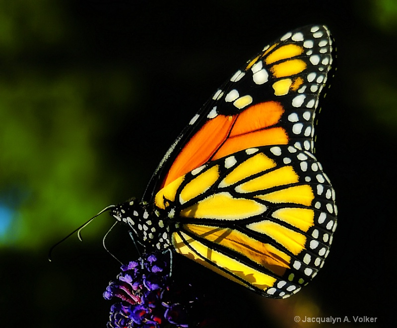 Flying his Vibrant Colors!