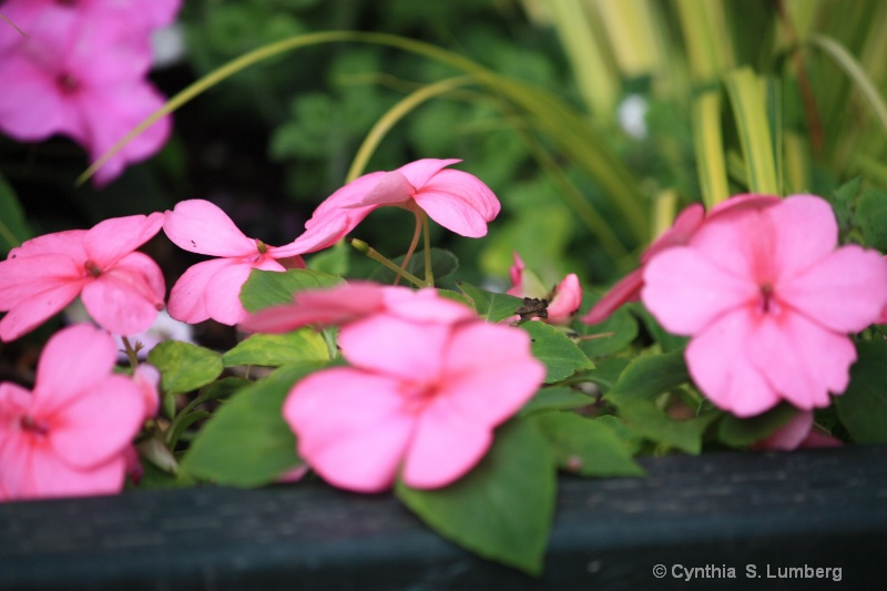 Summer Softness. . .