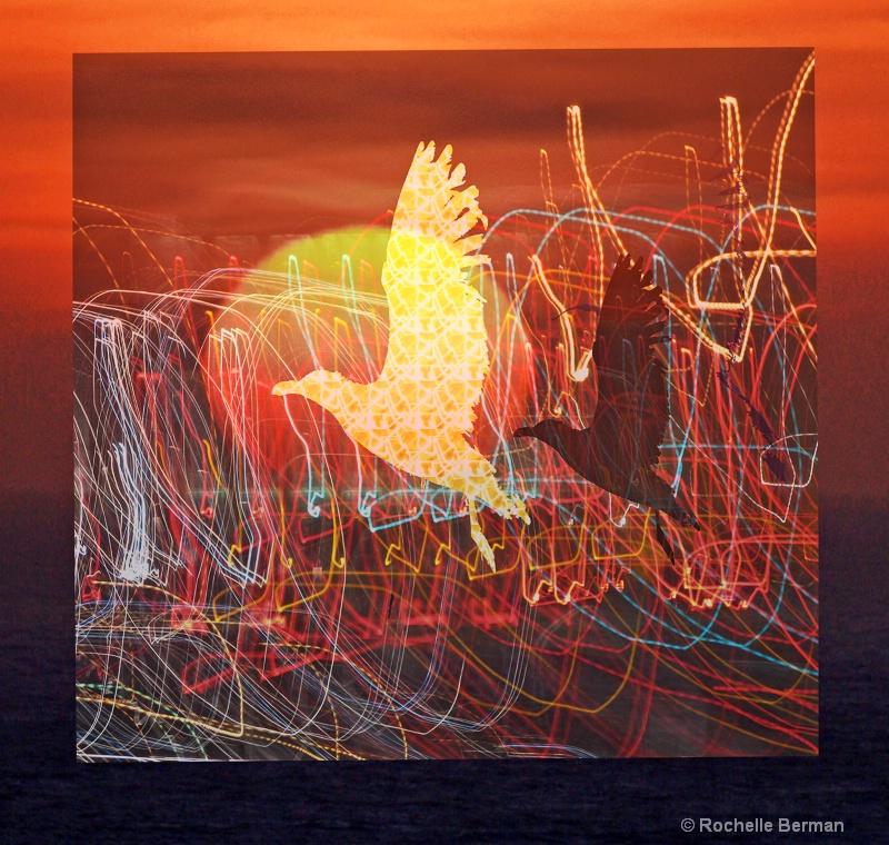 sunbirdsinflight