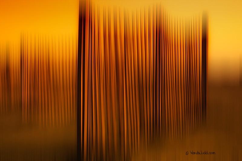 Sunrise on Sand fences...