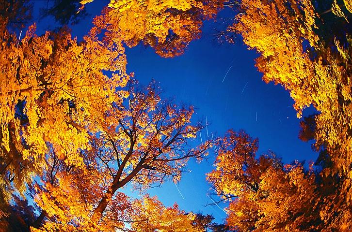 An Autumn Orbit