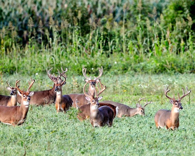 Field of Bucks