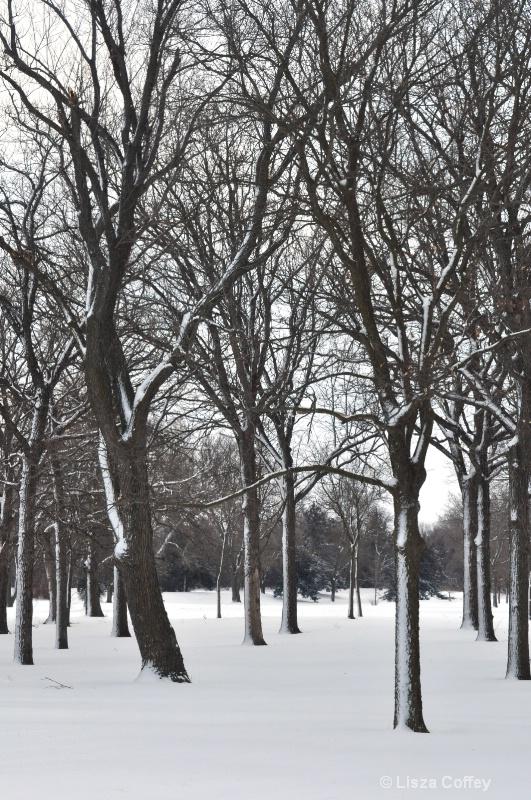 Pioneers Park snowstorm