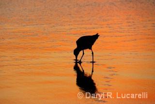 Shore walk at sunset