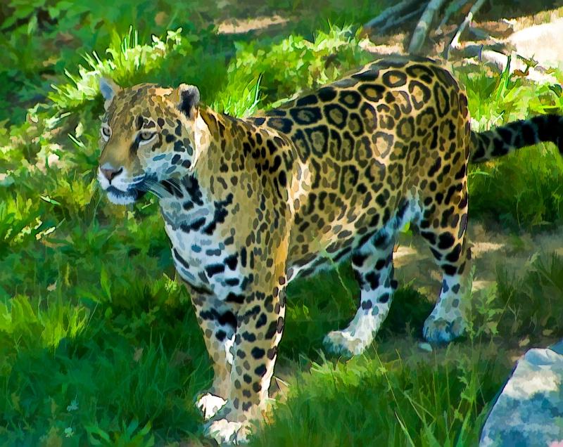 Proud Cheeta