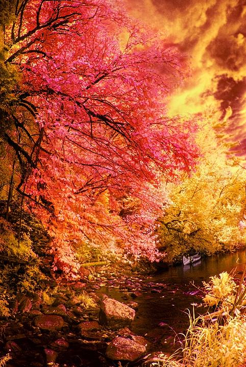Autumn in Infrared