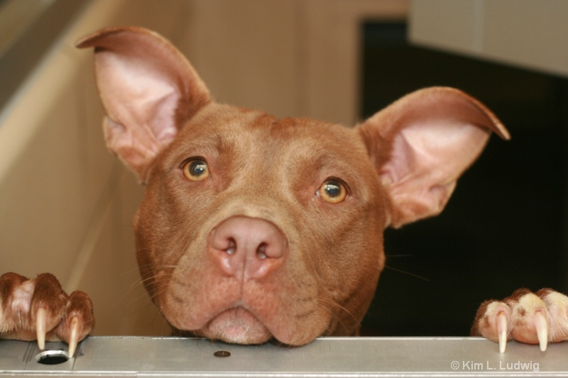 I'm All Ears!!