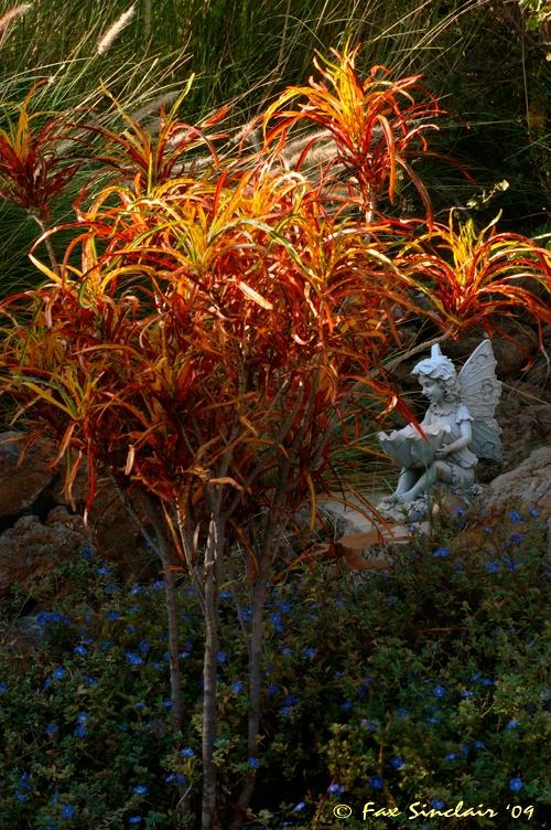 Garden Fairy 2