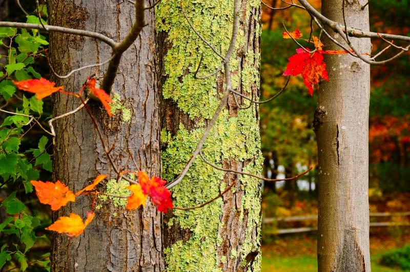 Leaf Me Here