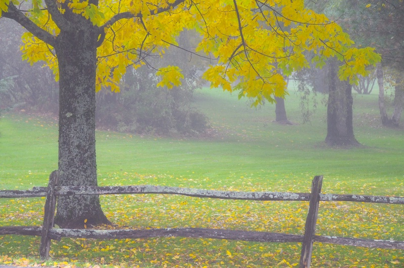 Vermont Morning
