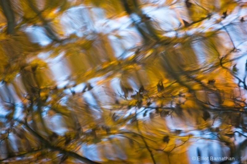 Fall Reflections 12