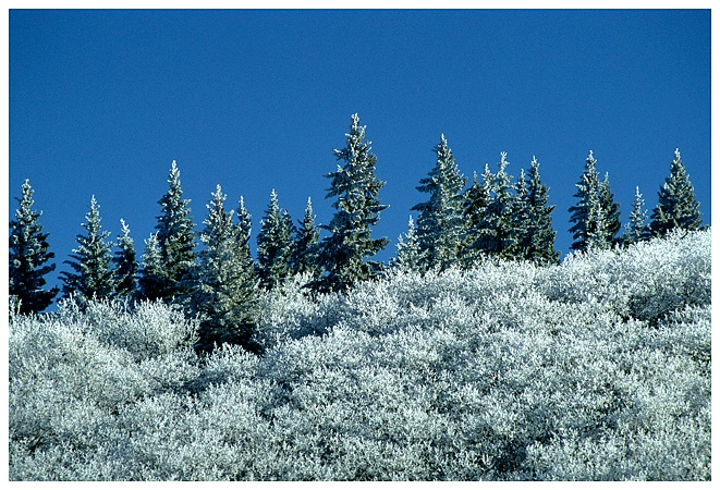 Cypress Hills Frost