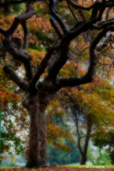 Lake Merritt Fall Flora
