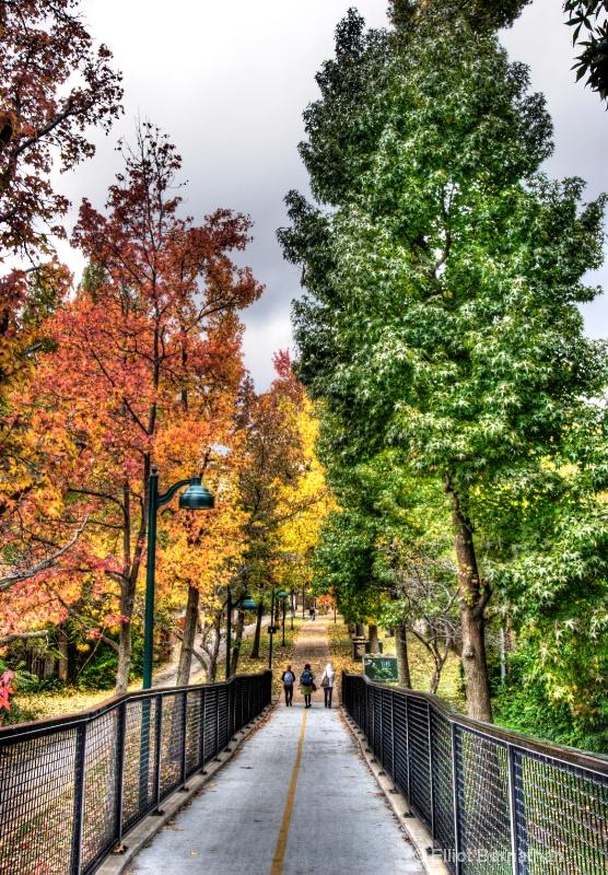 Washington University 14