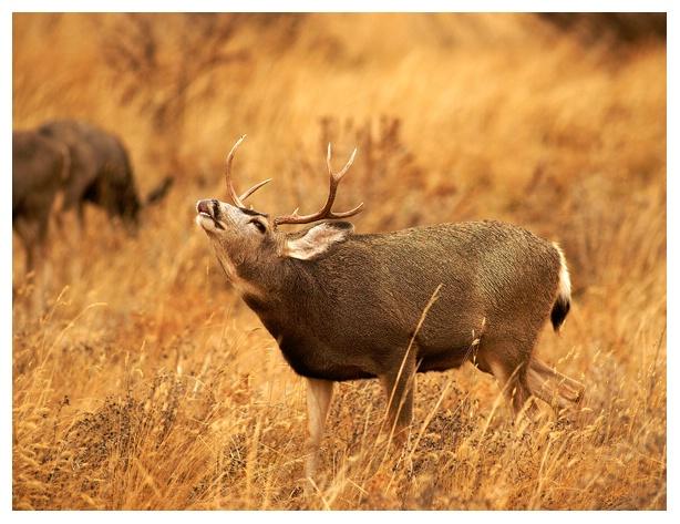 Buck Testing Air