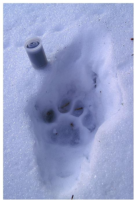 Cat Track, Cypress Hills SK