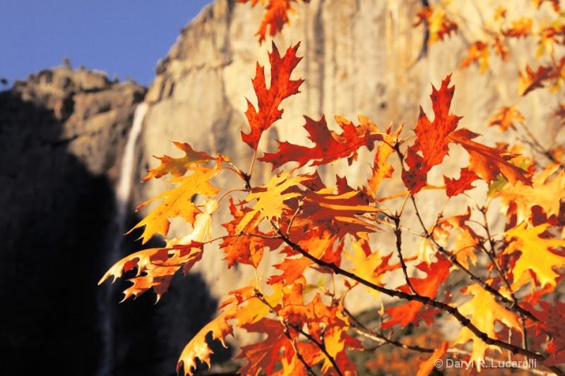 4337 - Yosemite Falls Branches