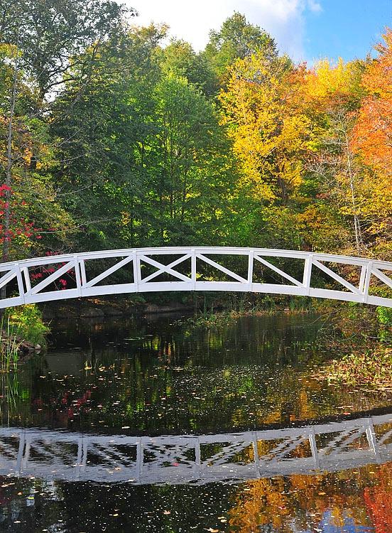 Bridge & Color