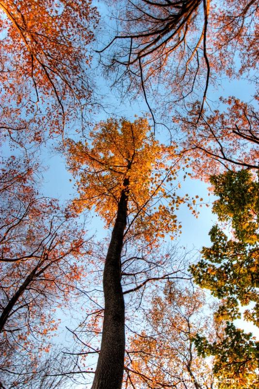 Fall Reflections 21
