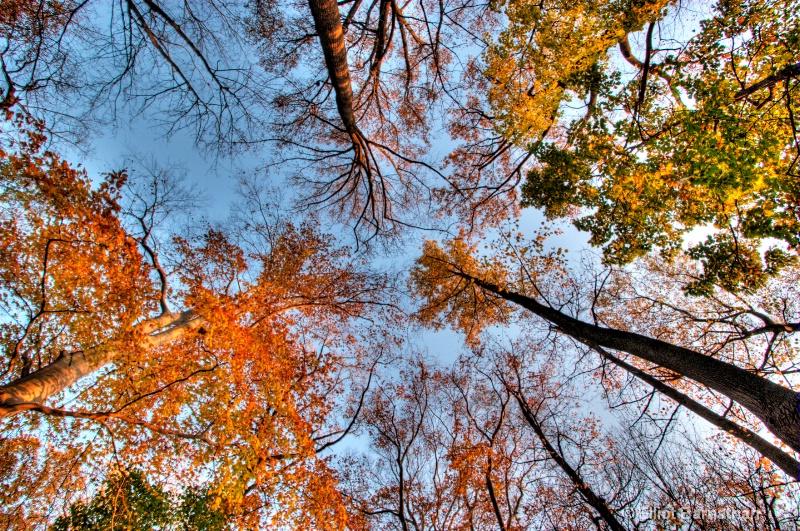 Fall Reflections 23