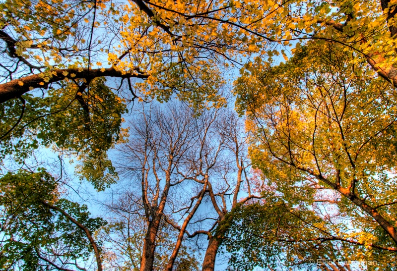 Fall Reflections 24