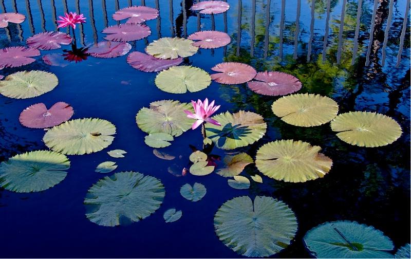 Pond Art
