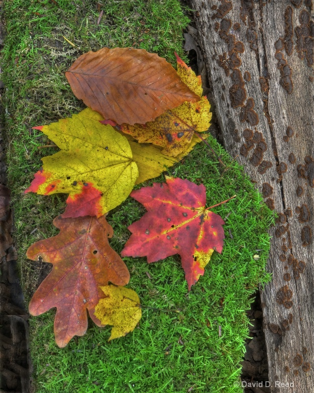Fall Leaves on Moss