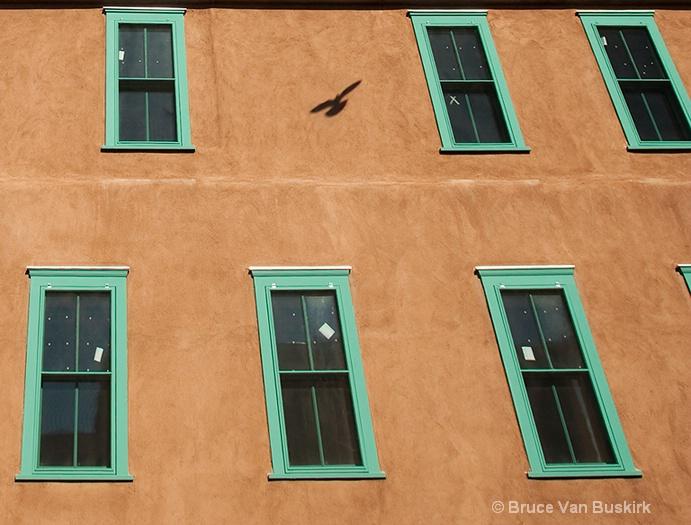 Bird's Shadow