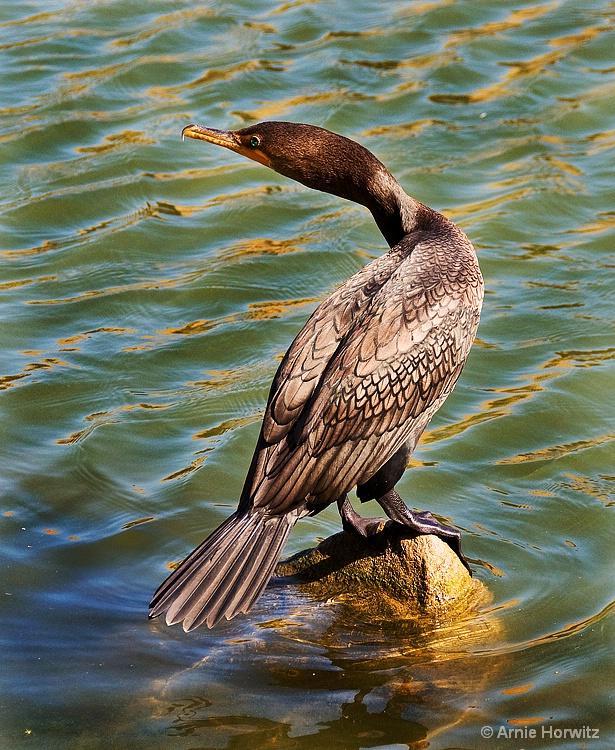 Bird on a Rock - II